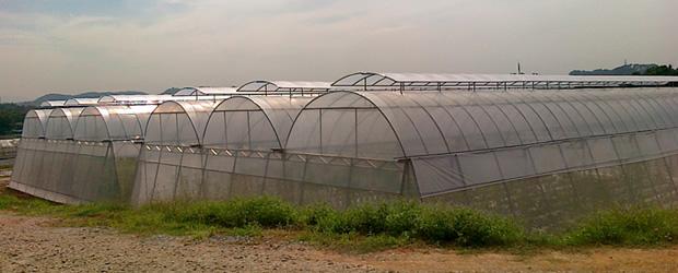 greenhouse-b